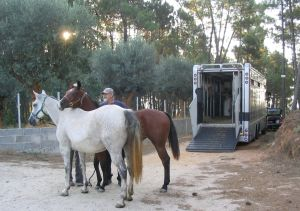 mare and foal unloading from horse transporter