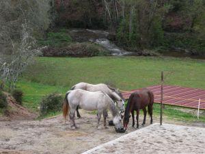 horses eat
