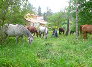 Horses and Prasado on clean up duty