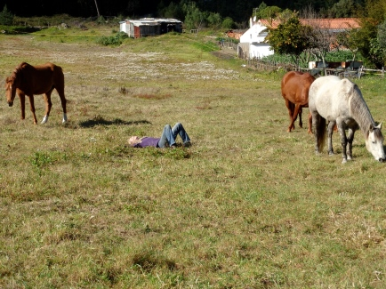 Lying in the grass with horses around me
