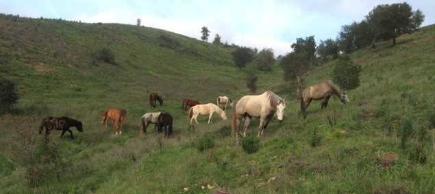 Horse herd on green grassy hill