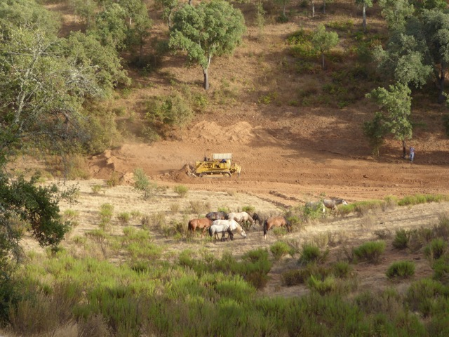 Bulldozer and horses